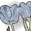 Denim Tulips by Cheryl Young