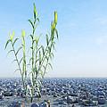 Desert Plant, Artwork by Carl Goodman