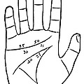 Diagram Used In Palmistry, 16th Century by Middle Temple Library