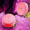 Diatom Algae, Sem Print by Susumu Nishinaga