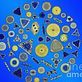 Diatom Arrangement Print by M I Walker