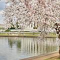 Digital Liquid - Cherry Blossoms Washington Dc 6 by Metro DC Photography