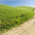 Dirt Road Through Field, Palouse, Washington by Paul Edmondson