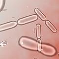 Dividing Bacteria, Computer Artwork by Robert Brocksmith
