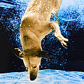 Diving Dog 3 by Jill Reger