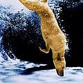 Diving Dog by Jill Reger