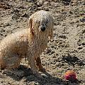 Dog 113 by Joyce StJames