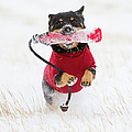 Dog Playing In Snow by Paws on the Run Photography