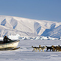 Dog Sled, Qaanaaq, Greenland by Louise Murray