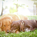 Dogs Snuggling Outside Being Cute by Jessica Trinh