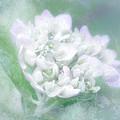 Dreaming Floral by Brenda Bryant
