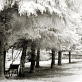Dreamy Surreal Infrared Park Bench Landscape by Kathy Fornal