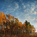 Dressed In Autumn Colors by Priska Wettstein