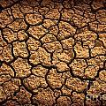 Dried Terrain by Carlos Caetano