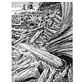 Driftwood Black Cat by Jack Pumphrey