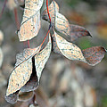 Dry Leaves by Lisa Phillips