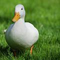 Duck On Grass by Mats Silvan