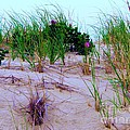 Dunes by Susan Carella