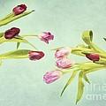 Eager For Spring by Priska Wettstein