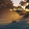 Early Morning Sun Beams Through Branches Of A Tree by Heinrich van den Berg