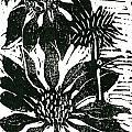 Echinacea Block Print by Ellen Miffitt