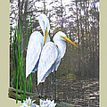 Egrets and Cypress Pond Print by KEVIN BRANT