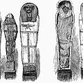 Egypt: Royal Mummies, 1882 by Granger