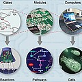 Electronic And Biologic Systems, Artwork by Equinox Graphics