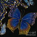 Elena Yakubovich - Butterfly 2x2 Lower Right Corner by Elena Yakubovich