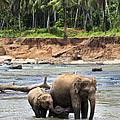 Elephant Family by Jane Rix