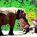 Elephant-parrot Dialogue by Rom Galicia