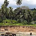 Elephants in the river Print by Jane Rix