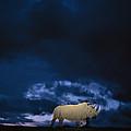 Endangered Northern White Rhinoceros by Michael Nichols
