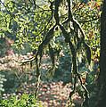 Epiphytic Moss by Doug Allan