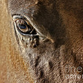 Eye Of The Horse by Susan Candelario