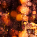 Fading Fall Flame by Royce Howland