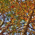 Fall Canopy by Barry Jones
