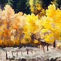Fall In The Sierra by Carol Leigh