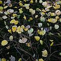 Fall Leaves by John Wong