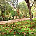 Fall Park by Carlos Caetano