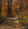 Fall Path Print by Mark Dunlap