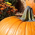 Fall Pumpkin by Kimberly Perry
