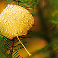 Fall Raindrops Print by Adam Pender