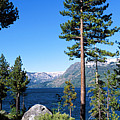 Fallen Leaf Lake Area With Pine Trees In Foreground, Lake Tahoe, California, Usa by Ellen Skye