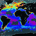 False-col Satellite Image Of World's Oceans by Dr Gene Feldman, Nasa Gsfc