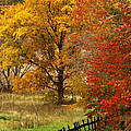 Fence In Autumn by Randall Branham