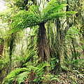 Fern Tree by MotHaiBaPhoto Prints
