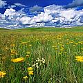 Field Of Flowers, Grasslands National by Robert Postma