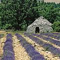 Field Of Lavender. Sault by Bernard Jaubert