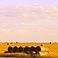 Fields Of Plenty by Kate Purdy
